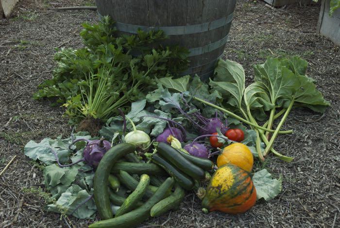 Wendy's kitchen garden